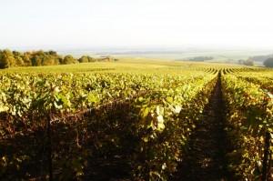 Wijngaarden bij Villers-Marmery, een premier cru