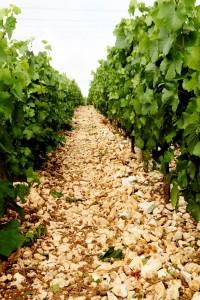 Wijngaard van Dosnon in Avirey-Lingey