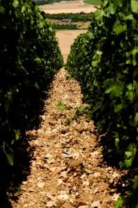 wijngaarden van Rémy Massin