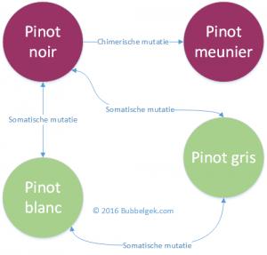 Pinot family